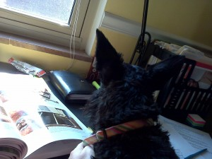 Mayzie completes the final edit on Dog Lover's Daily Companion.